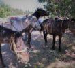 Конные прогулки. Шаан-Кая