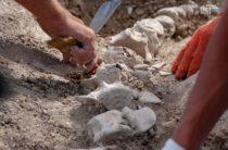 Найден скелет древнего кита в Крыму
