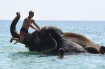 В Крыму купаются слоны (видео)