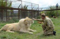 Молодой лев скоро поменяет место жительства