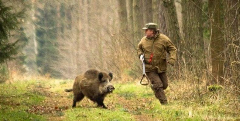 Запрет на охоту введен в Ялтинском регионе