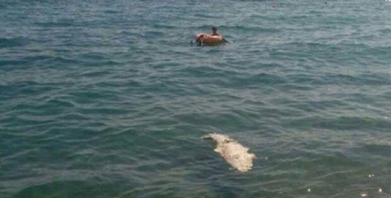 В Ялте нашли мертвого крокодила (видео)