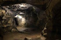 Останки древних жирафа, дикобраза и слона нашли в Крыму
