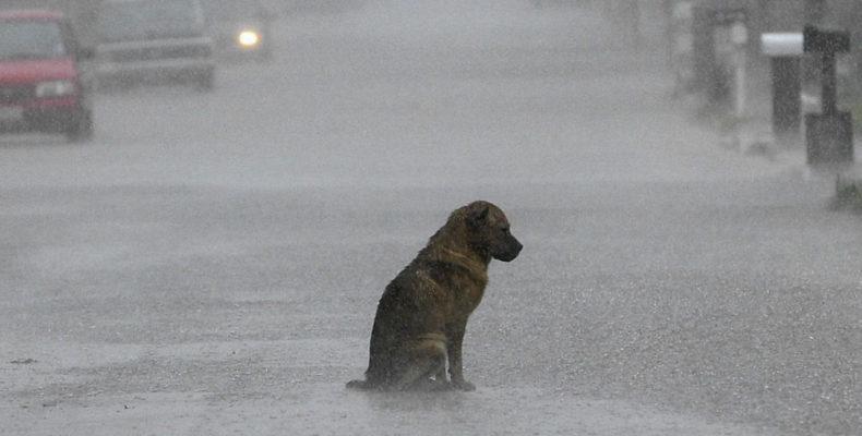 Им платят за каждый труп собаки: ветеринар пытался заработать 500 тысяч рублей