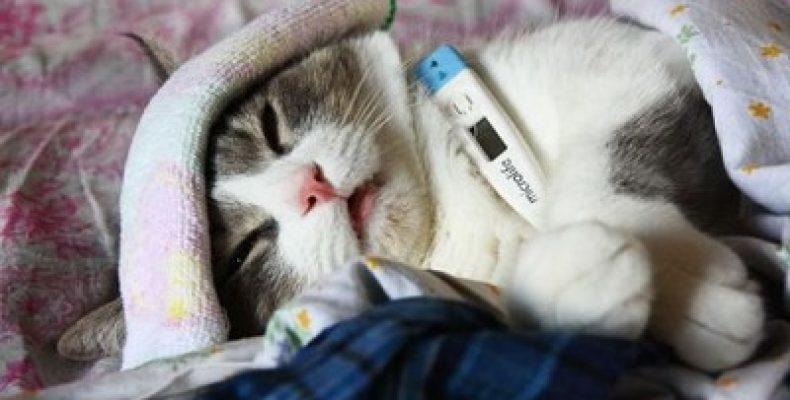 Штаммы гриппа атакуют: особенности, симптомы