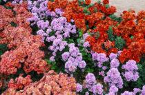 «Бал хризантем» 2018 в Никитском саду