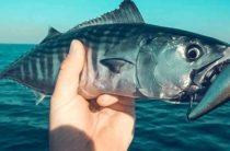 В Российской Федерации вступают в силу новые штрафы за вылов рыбы