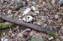 Ялта: на старом кладбище найдены свежевыкопанные останки человека