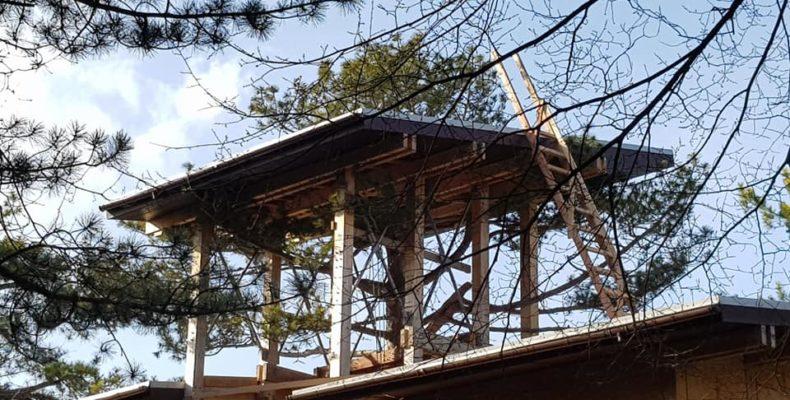 Ялта: жители города продолжают выявлять факты уничтожения вековых деревьев