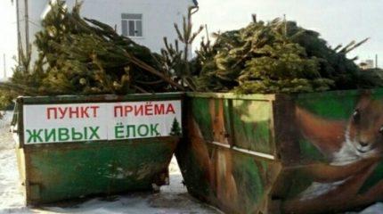 20 января жители Крыма смогут сдать новогодни елки (список пунктов приема)