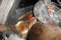 В Крыму полиция устроила погоню за браконьером, убившим оленей