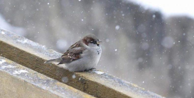 В Крым идет холодный циклон: экстренное предупреждение МЧС
