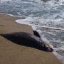 Дельфины массово выбросились на берег Евпатории