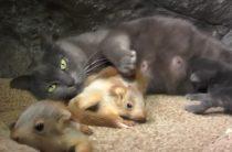 В Крыму кошка усыновила бельчат (ВИДЕО)