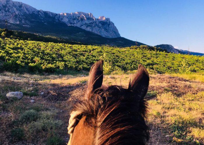 уши лошади