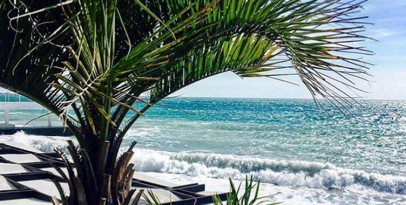 Эпизоотия пальмового мотылька и пальмового долгоносика в Крыму представляет серьезную угрозу