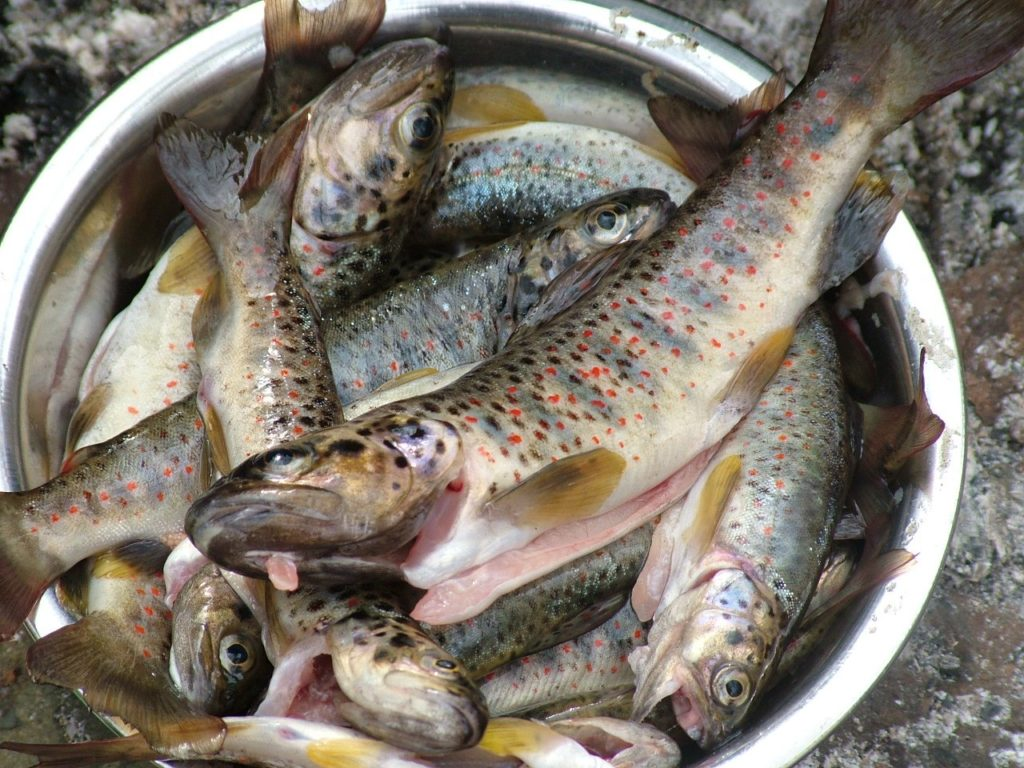 Рыба Крым
