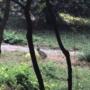 Ялта: в Массандровском парке появились зайцы (видео)
