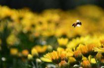 Не жужжит: эксперт назвал причины массовой гибели пчел