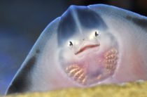 Крым: 5 самых опасных рыб Черного моря