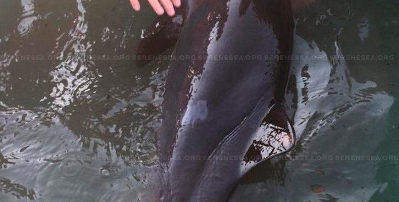 В Севастополе туристы ради селфи замучили умирающего дельфина