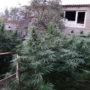 У жителя Симферопольского района изъяли пять килограмм конопли