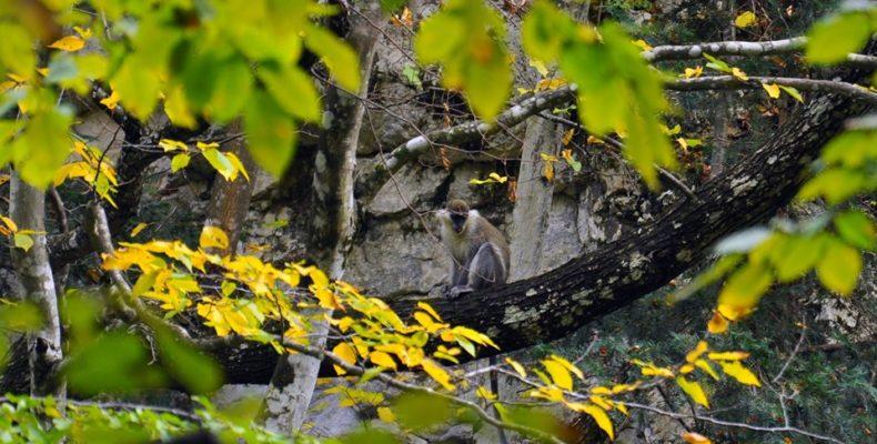 В Большом каньоне Крыма поселилась обезьяна