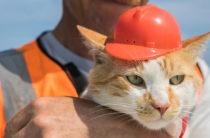 «Холостяк и карьерист»: что будет с котом-талисманом Крымского моста