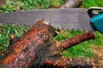 Правительство изменит правила сноса деревьев в городах Крыма