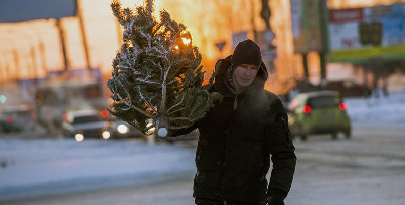 Кому в Крыму разрешено вырубать ёлки под Новый год?