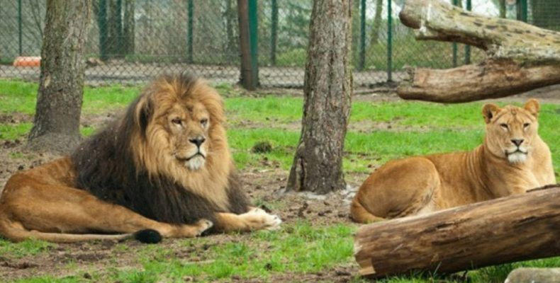 Экс-мэр столицы Ингушетии хочет забрать животных из «Тайгана»