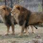 Крым: суд закрыл сафари-парк