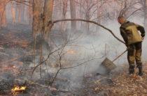 Штраф до миллиона: в леса Севастополя запрещено ходить до 21 мая