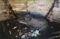 Ялта: специалисты «КРЫМ-СПАС» оказали помощь пострадавшему дикому животному (фото, видео)