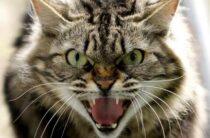 Крым: бешеная кошка закрыла на карантин целый поселок