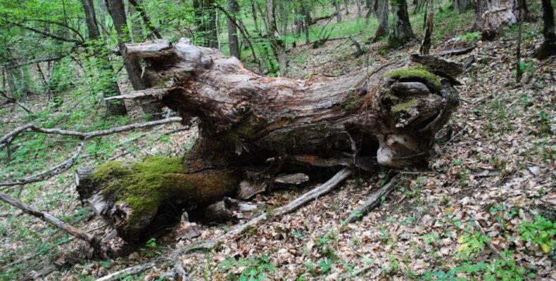 В Крыму запретили  посещать леса