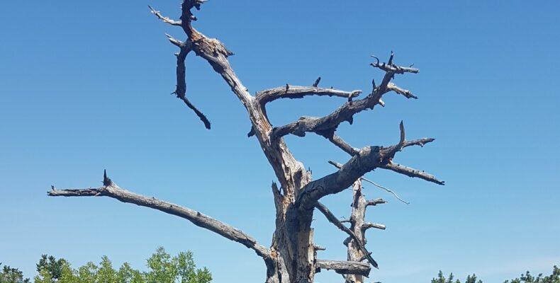 Почем билеты на тушение пожара? Ялтинские леса в опасности