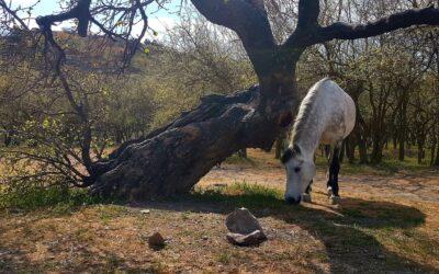 Конные прогулки | Судак