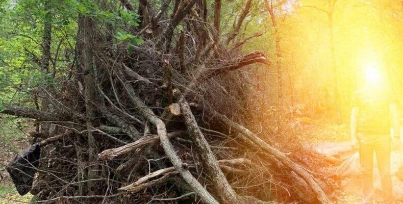 В Ялтинском заповеднике нашли закладку для поджога леса