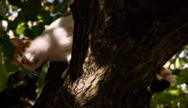 Женщина в Ялте хотела снять кота с дерева и сама там застряла
