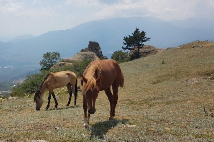 Конные прогулки   Демерджи