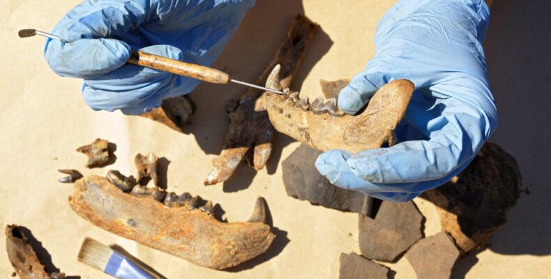 Крым: в пещере «Таврида» нашли кости древнего носорога
