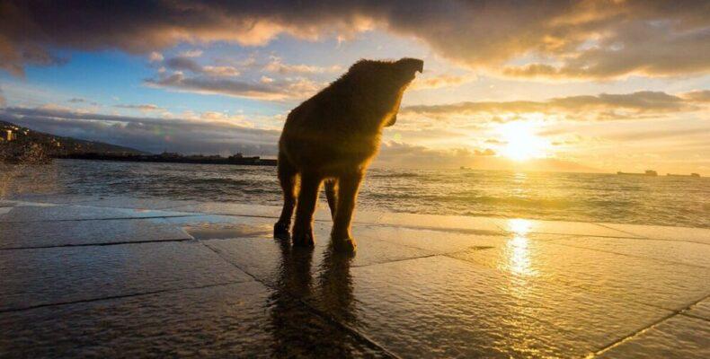 В Ялте утверждён порядок обращения с животными без владельцев