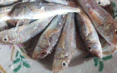 Рыбалка с катера | Гурзуф