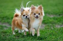 Кинологи назвали смертельно опасные для собак растения