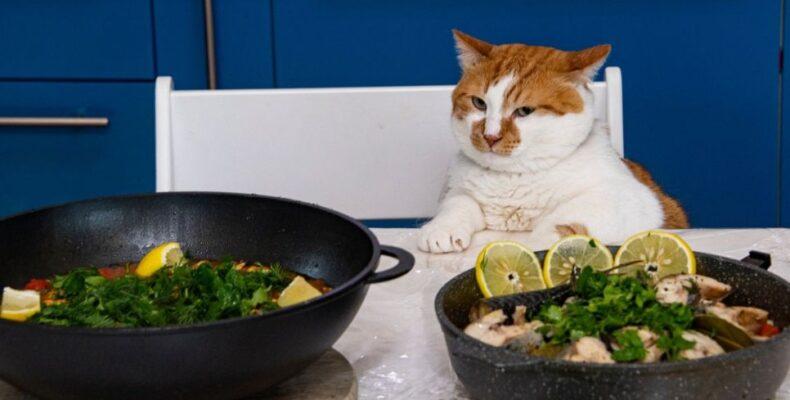 Два рецепта от крымских татар для кота Мостика