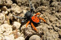 Врач рассказал, как избавиться от панического страха перед пауками