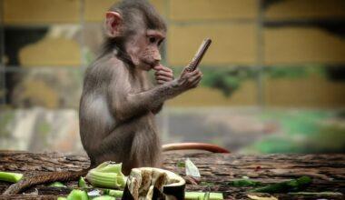 Ялта: обезьяны напали на туристов – отобрали мобильный телефон и оттаскали за волосы (видео)